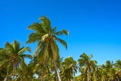 Tulum palm trees jungle on Mayan Riviera beach Stock Photo