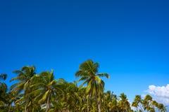 Tulum palm trees jungle on Mayan Riviera beach Stock Images