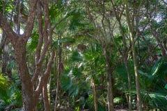 Tulum Riviera Maya jungle in Mexico. Tulum Riviera Maya jungle in Mayan Mexico royalty free stock photo