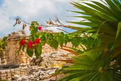 Tulum, Riviera Maya, Yucatan, Mexico: Red flowers and Ruins of the destroyed ancient Mayan city.  stock images