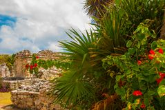 Tulum, Riviera Maya, Yucatan, Mexico: Red flowers and Ruins of the destroyed ancient Mayan city.  stock photography