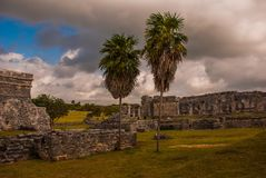 Tulum, Riviera Maya, Yucatan, Mexico: Two palm trees and the old ruined city of may.  stock image