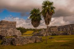 Tulum, Riviera Maya, Yucatan, Mexico: Two palm trees and the old ruined city of may royalty free stock image