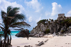 Tulum ruins. In mexico on yucatan peninsula royalty free stock photo
