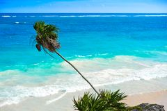 Tulum turquoise beach  palm tree in Riviera Maya at Mayan Royalty Free Stock Images