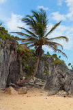 tulum yucatan του Μεξικού παραλιών Στοκ Φωτογραφία