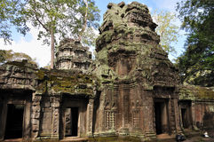 Tum Prohm in Angkor Wat fotografia stock libera da diritti