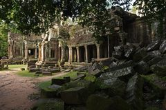Tum Prohm senza copertura dell'albero, Siam Reap, Cambogia Fotografia Stock Libera da Diritti
