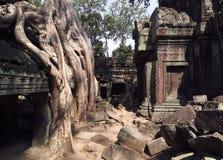 Tum Prohm Tempel Fotografia Stock