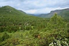 tumalo canyon creek Zdjęcie Royalty Free