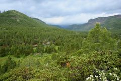 Tumalo Creek Canyon Royalty Free Stock Photo