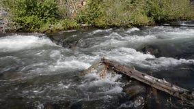 Tumalo creek in central Oregon stock video