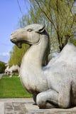 Tumbas de Ming: camello que se sienta. foto de archivo