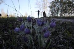 Tumbelina Στοκ φωτογραφία με δικαίωμα ελεύθερης χρήσης