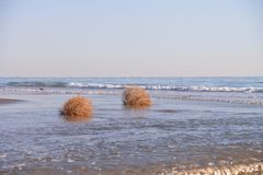 Tumble Weeds on Beach Stock Image