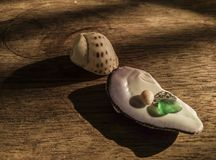 Tumbled glass placed with shells royalty free stock images