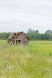 Tumbledown barn on a field. That will fall apart any minute Royalty Free Stock Photos