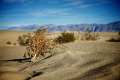 Tumbleweed Stock Images