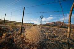 Tumbleweed on Barbed Wire Fence Royalty Free Stock Photo