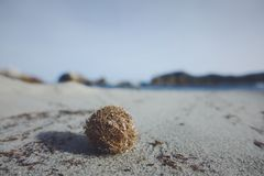 Tumbleweed. On a beach Royalty Free Stock Images