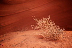 Tumbleweed In Canyon Stock Image