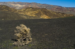 Tumbleweed in the desert. A desert background with mountains and tumbleweed Royalty Free Stock Images