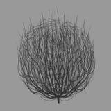 Tumbleweed drawing vector Stock Photography