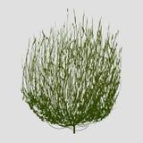 Tumbleweed drawing vector Royalty Free Stock Photography