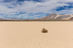 Lone weed on dry lake bed in desert Royalty Free Stock Photography