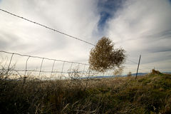 The Tumbleweed Fence. A barbedwire fence snatches a single tumbleweed from the air and latches onto it Stock Photography