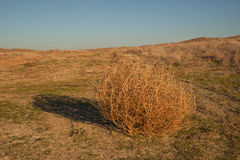 Tumbleweed. On a meadow in autumn Royalty Free Stock Image