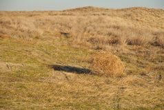 Tumbleweed. On a meadow in autumn Royalty Free Stock Images