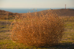 Tumbleweed. On a meadow in autumn Stock Photos