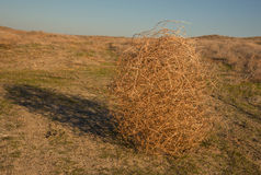 Tumbleweed. On a meadow in autumn Stock Images