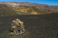 Tumbleweed nel deserto Immagini Stock Libere da Diritti