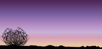 Tumbleweed Sunset Royalty Free Stock Photography