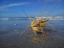 Tumbleweed sur la plage Image stock