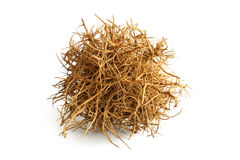 Tumbleweed Royalty Free Stock Photos