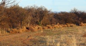 Tumbleweeds выравнивают загородку Стоковые Изображения