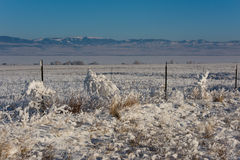 Tumbleweeds Coated in Thick Hoar Frost Hanging on a Barbed Wire Stock Image