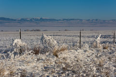 Tumbleweeds Coated in Thick Hoar Frost Hanging on a Barbed Wire Stock Images