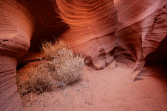 Tumbleweeds in a Corner Royalty Free Stock Images
