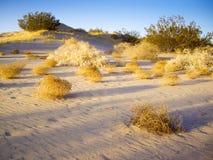 Tumbleweeds Mojave pustynia Fotografia Royalty Free