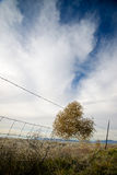 Tumbling into a Fence Royalty Free Stock Photography