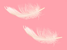 Tumbling floating feather over pink - fluffy, ligh Royalty Free Stock Images