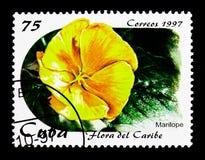 Tumera ulmifolia花, serie,大约1997年 库存照片