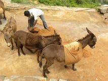Tumkur, Karnataka, Indien - 1. Januar 2009 a-Mann, der Maultiere verwendet, um Sand vom Berg zu transportieren lizenzfreie stockbilder