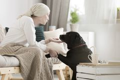 Tumor patient caressing her dog. During pet therapy royalty free stock image