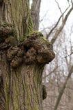 Tumorous träd Arkivbild