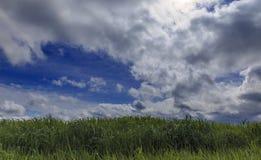 Tumult av nya vårgräs och moln Royaltyfria Bilder